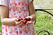 A little girl holding cherries