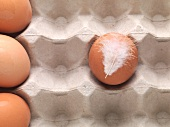 Hühnereier mit Feder im Eierkarton (Draufsicht)