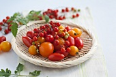 Yellow cocktail tomatoes, plum tomatoes and currant tomatoes on a wicker plate