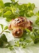 A bread tortoise