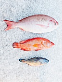 Varieties of fish on ice bed