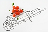 Real cherry tomatoes on drawing of wheelbarrow