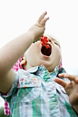 Little girl holding open mouth for bunch of red currants