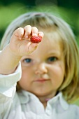 Little girl holding out raspberry