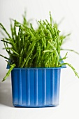 Fresh samphire in a plastic punnet