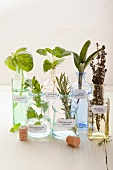Various herbs in apothecary bottles