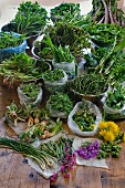 Various types of fresh, wild herbs