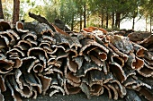 Freshly peeled cork rinds stacked in a forest