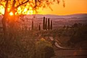 Die Zypressen auf dem Weingut Pacina, Sonnenuntergang im Chianti Classico