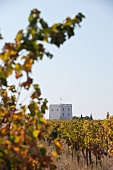 Vines and tower on the Esporão winery