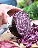 Cutting up red cabbage