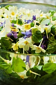 Delicate spring salad with flowers and lime leaves