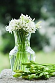 Ramsons with buds and flowers in a vase