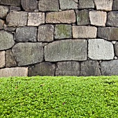 A stone wall and a hedge