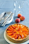 Fresh apricot cream tart