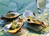 Oysters in a wine foam sauce