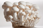 White beech mushrooms (Buna-Shimeji mushrooms, Japan)