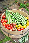 Fresh garden vegetables in a sieve (tomatoes, courgettes, green beans)
