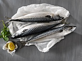 Three Whole Fresh Atlantic Mackerel on White Paper; Lemon and Herbs