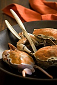 Edible crabs in a bowl