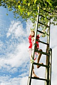 Boy climbing ladder to tree