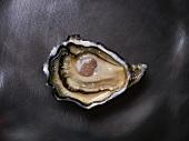 Eine Gillardeau-Auster