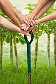Hands pushing shovel into dirt