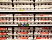 Rows of Egg Cartons on Display