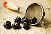 Blackberries Spilling from a Colander