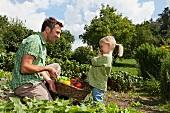 Vater und Tochter tragen einen Korb mit frisch geerntetem Gemüse