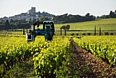 Vineyard cultivation with a highrise tractor and Chateauneuf-du-Pape in the background