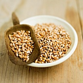 Wheat grains in a bowl and on a scoop
