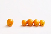 Five kumquats
