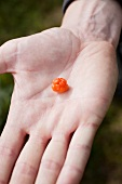 A cloudberry on the palm of someone's hand
