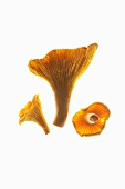 Three chanterelles