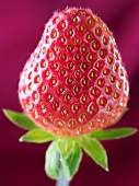One Strawberry; Close Up