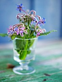 Borrage flowers in a vase