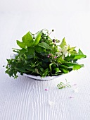 Fresh wild herbs on a plate