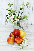 Fresh apples and sprigs of apple blossom