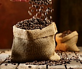 Coffee beans falling into a jute sack