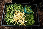 Green and Waxed Beans in a Crate at a Farmer's Market
