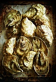 East Coast Oysters on a Metal Pan
