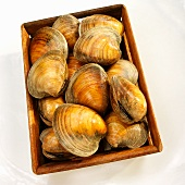 Crate of Big Neck Clams; From Above