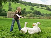 Girl Feeding Geese