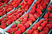 Baskets of Freshly Picked Organic Strawberries at a Farmer's Market