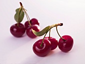 Cherries with stems and leaves