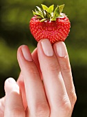 Hand Holding a Strawberry; White Background