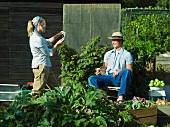 Paar macht Pause bei der Gemüseernte im Garten