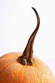 Top of a Pumpkin with Stem