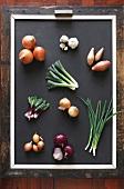 An assortment of onion varieties, leeks and garlic